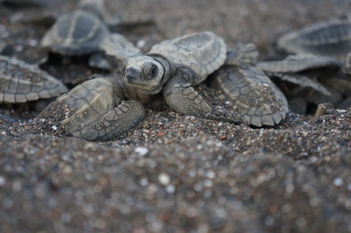 Hatchlings heading out into the big world